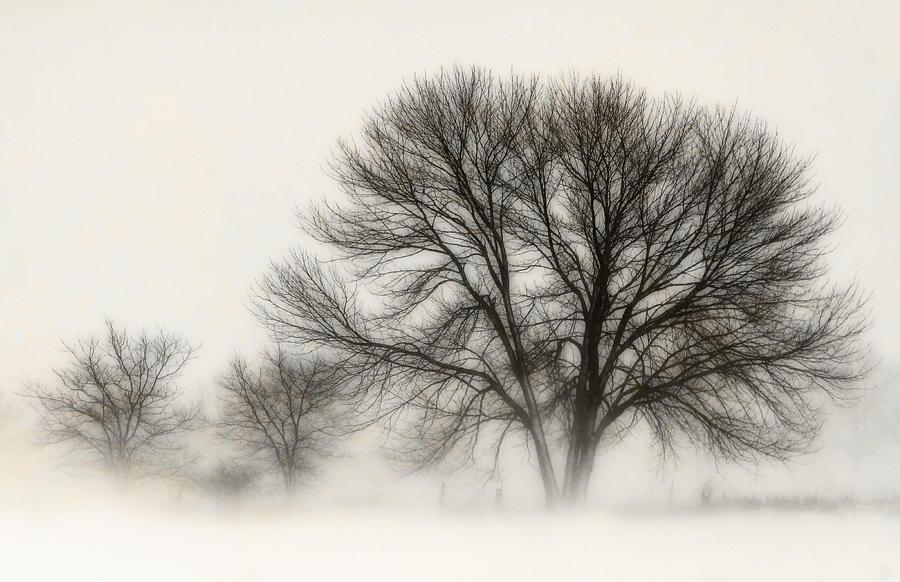 Snow Kissed Photograph