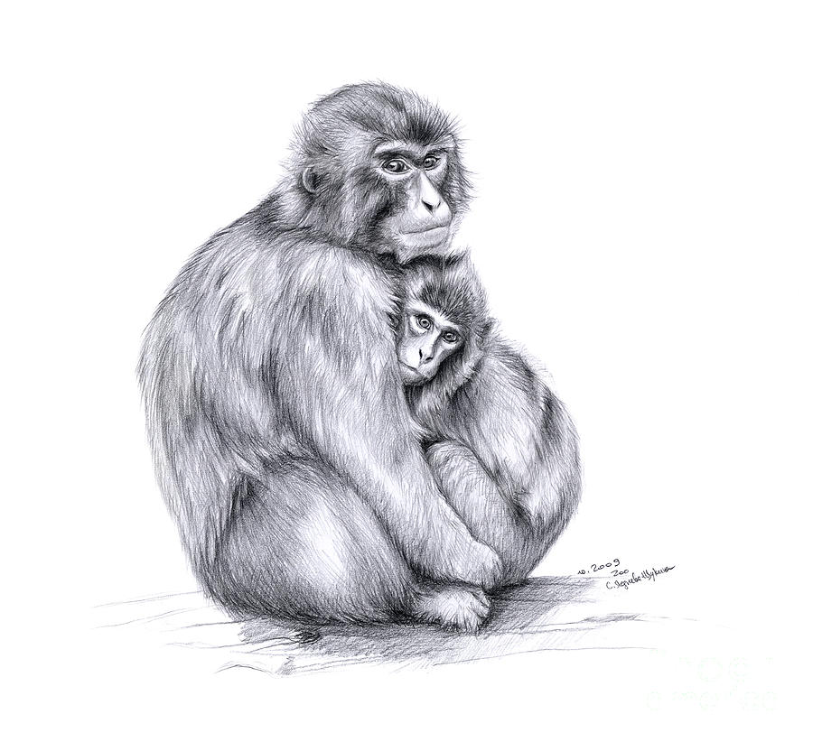 Monkey Drawing - Snow Monkey And Baby by Svetlana Ledneva-Schukina
