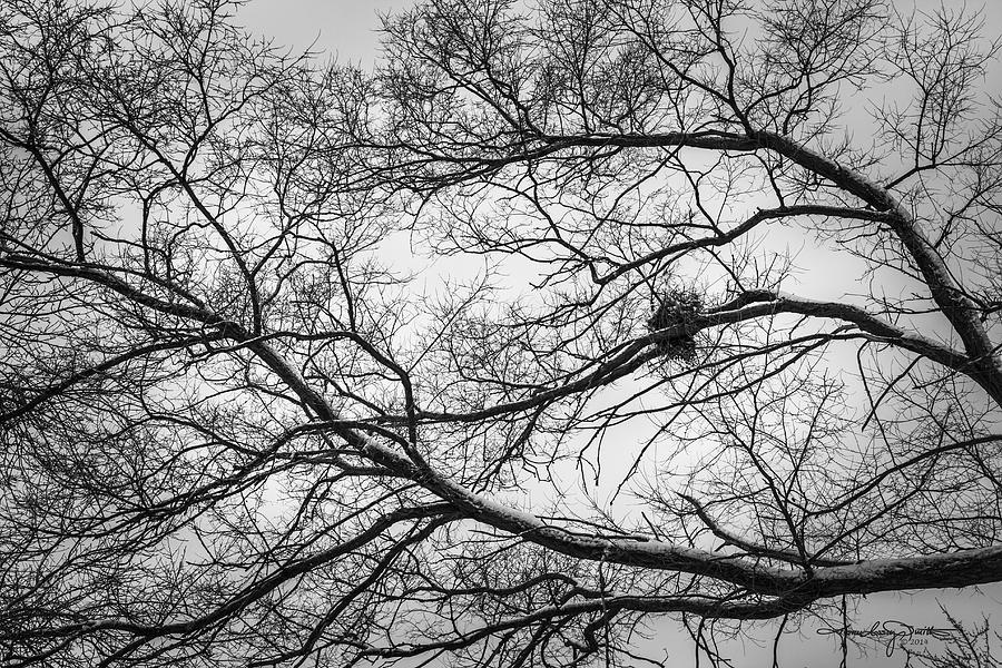 Winter Photograph - Snow On Bare Branches by Karen Casey-Smith