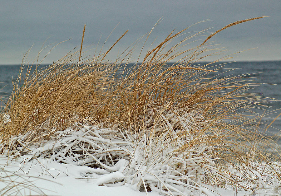 Snow Photograph - Snow On The Dunes by Nancy Landry