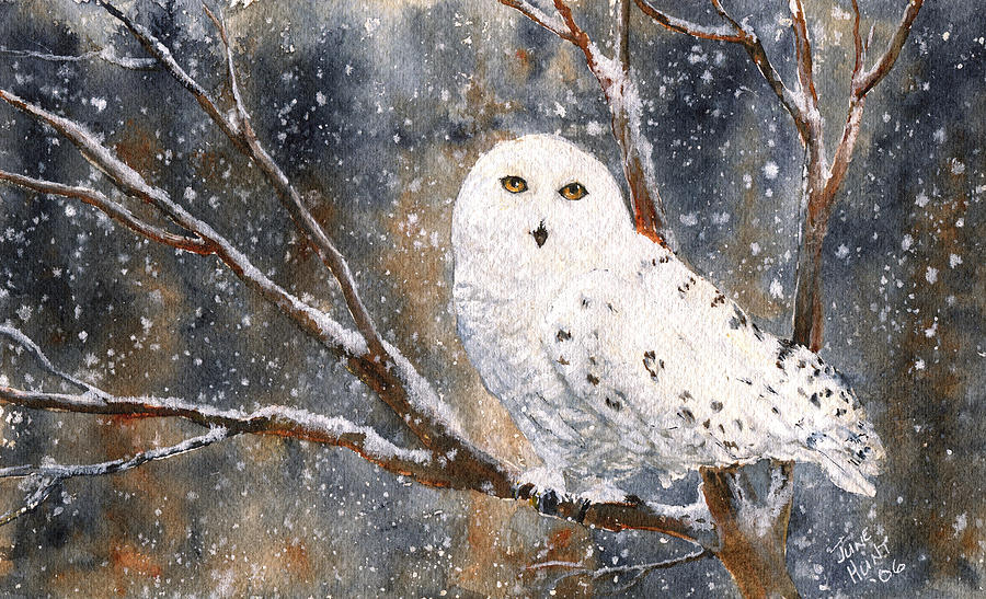 Wildlife Painting - Snow Owl - Canada by June Hunt