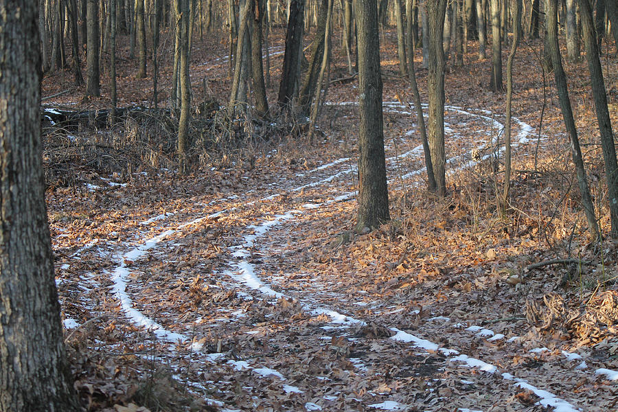 Woods Photograph - Snow Path Winding Through The Woods by Annette Gendler