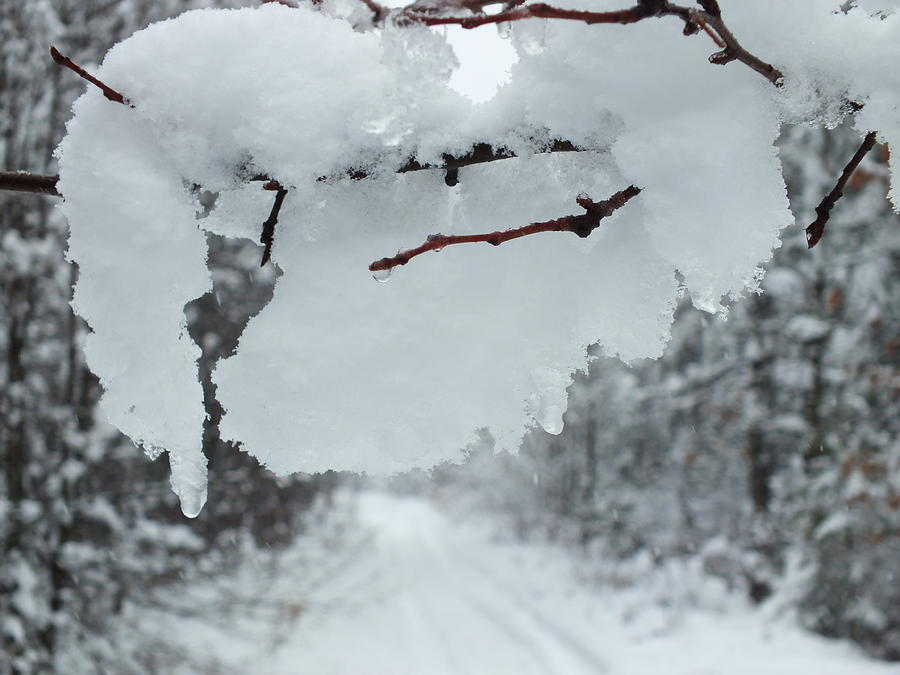 Snow Storm Photograph - Snow Storm 4 by Gene Cyr
