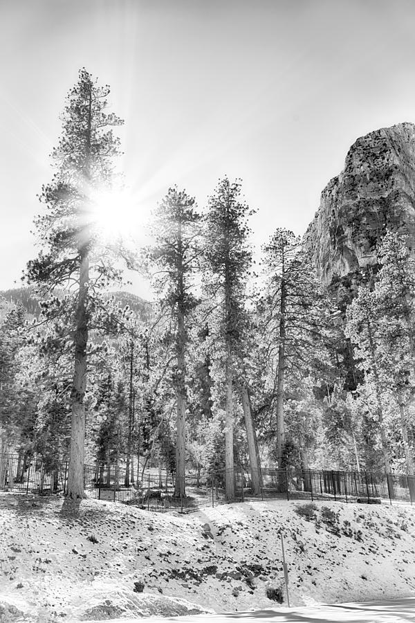 Nature Photograph - Snow Trees by Howard Salmon