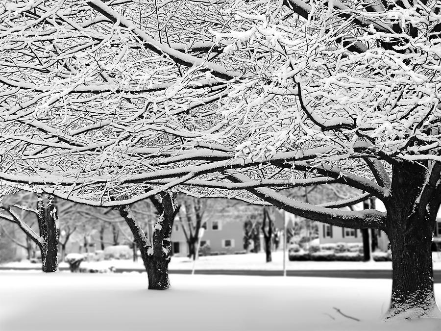 Snow Trees by Sandy Scharmer