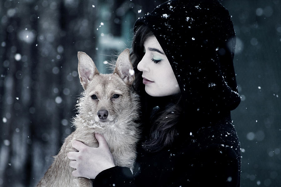 Pet Photograph - Snow walk by Cambion Art