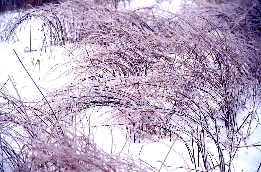 Snow Weeds 31 Photograph by Stephen Parker