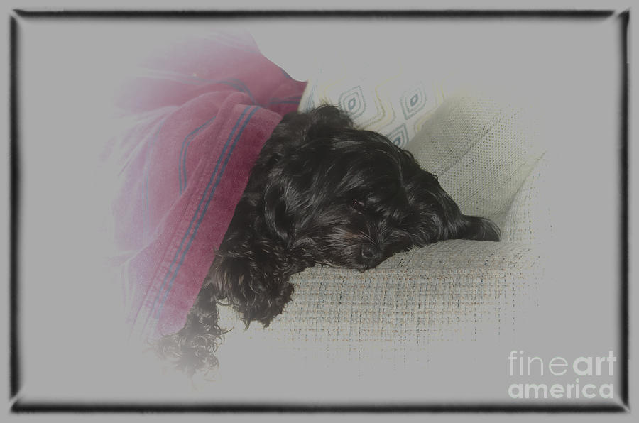Dog Photograph - Snowday Nap by Joe McCormack Jr