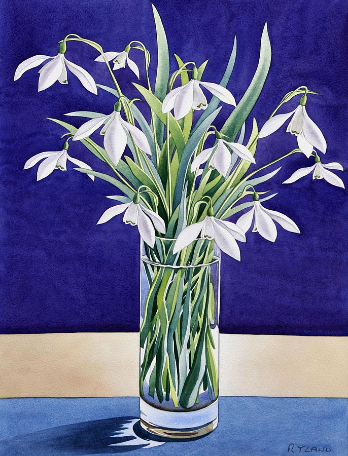 Snowdrop Painting - Snowdrops  by Christopher Ryland