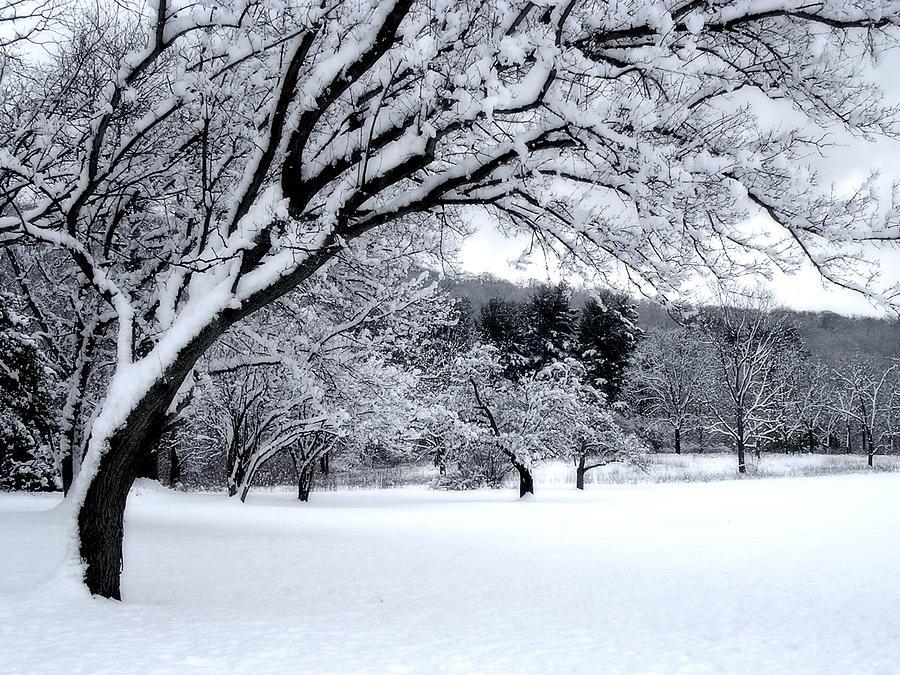 Snowfall Digital Art