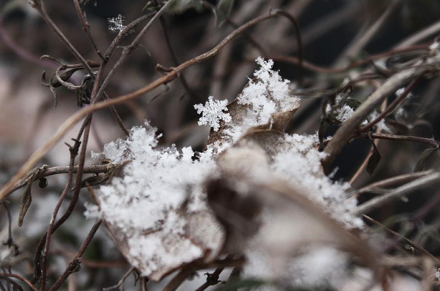 Snowflake Photograph - Snowflakes by Candice Trimble