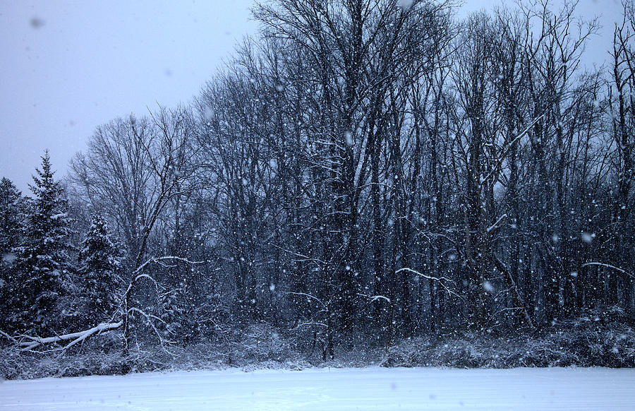 Snow Photograph - Snowing by Barbara Giordano