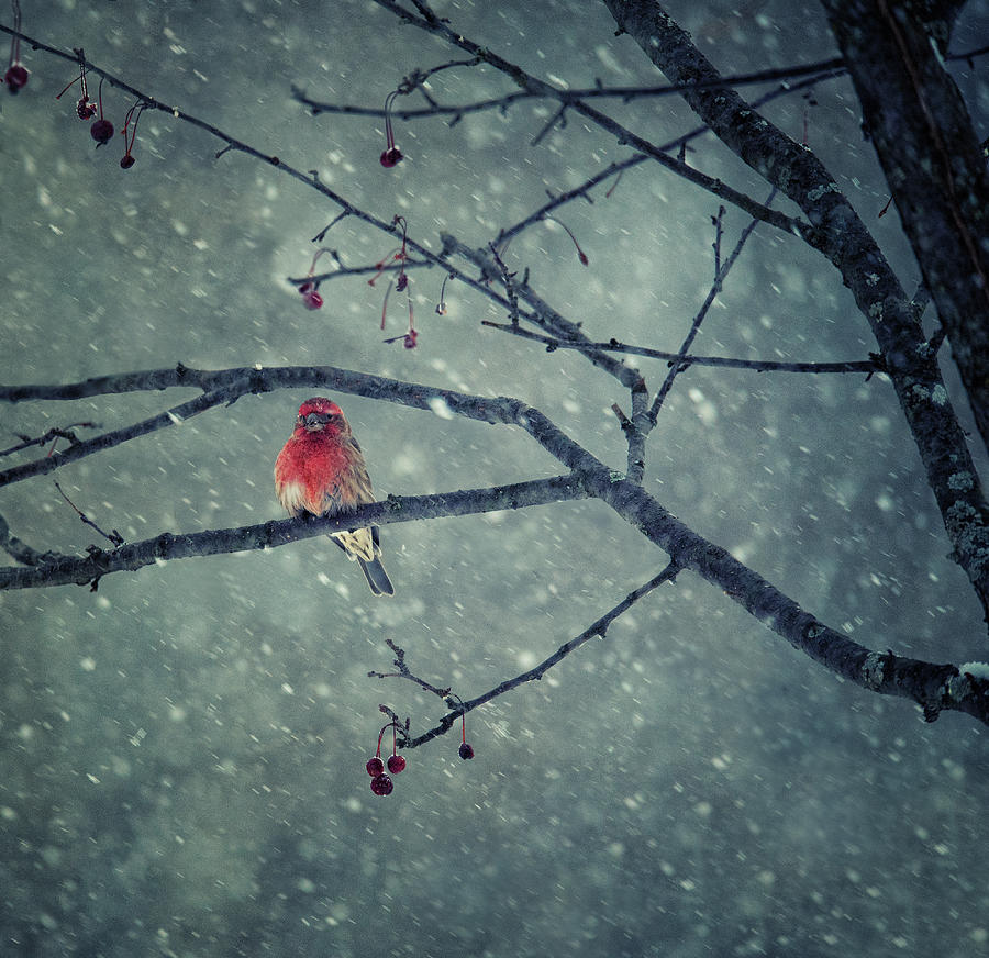Red Photograph - Snowing by Yu Cheng