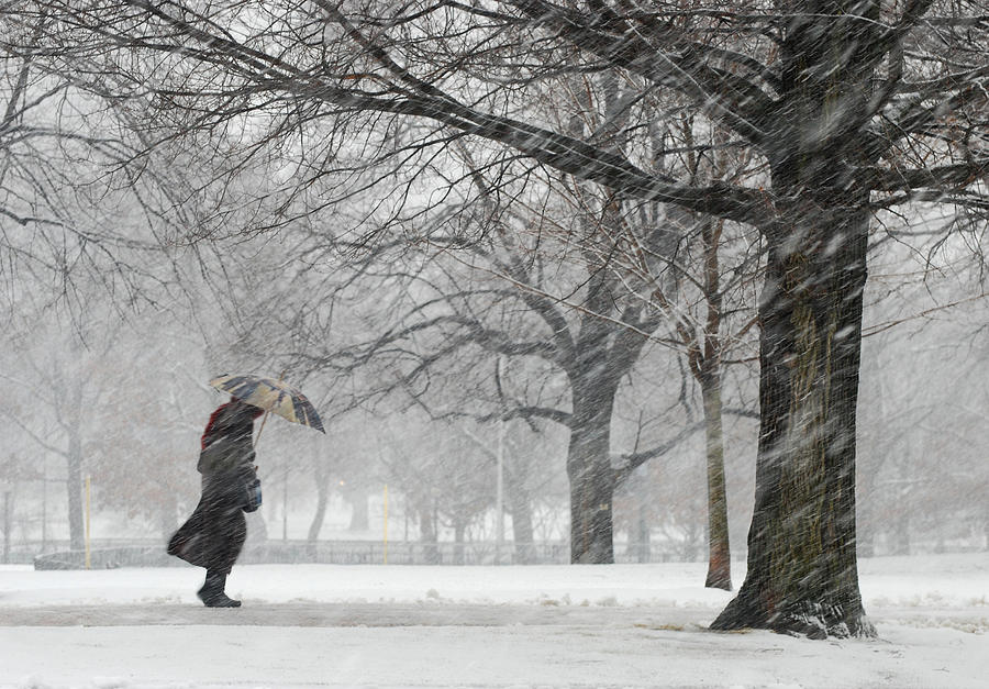 Snowstorm on Boston Common Photograph by Gillian Henry