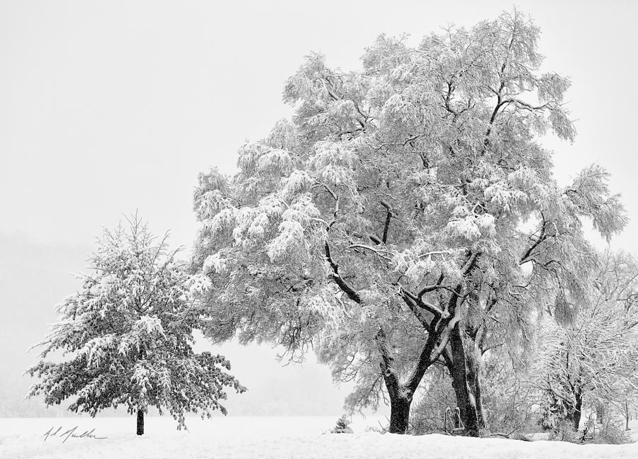 Snowstorm swing by Al  Mueller