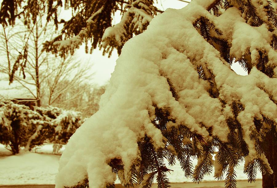 Snow Photograph - Snowy Branch by Nickaleen Neff