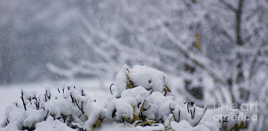 Snow Photograph - Snowy by Carol Lynch