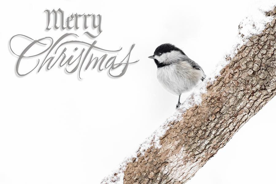 Snowy Chickadee Christmas Card Photograph By Lori Coleman