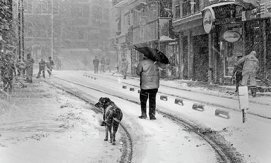 Dog Photograph - Snowy Day A?n A?stanbul by Devrim ?nl?