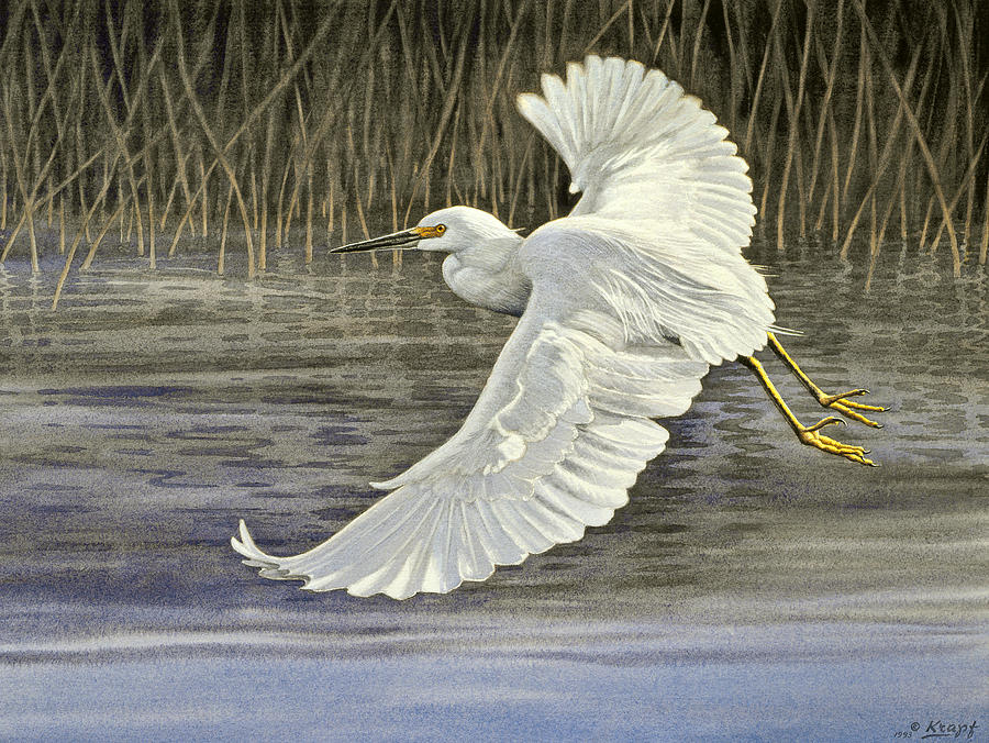 Wildlife Painting - Snowy Egret by Paul Krapf