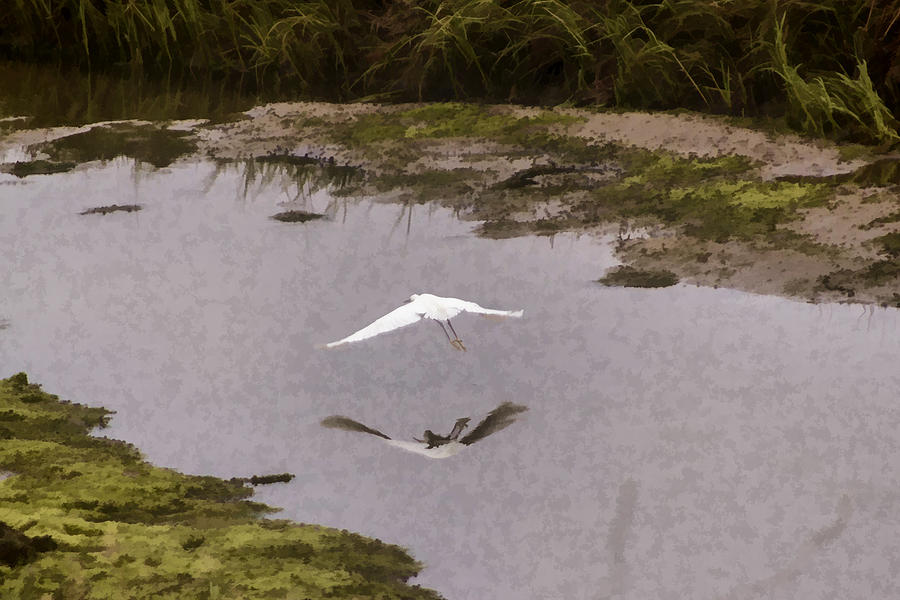 Great Egret Digital Art - Great Egret by Photographic Art by Russel Ray Photos