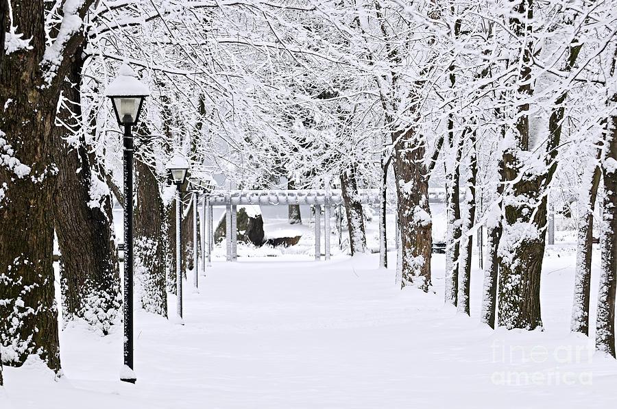 Winter Photograph - Snowy Lane In Winter Park by Elena Elisseeva