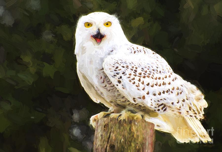 Snowy Photograph - Snowy Owl by Les Palenik