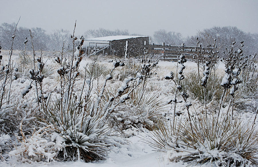 Snow Photograph - Snowy Pasture by Melany Sarafis