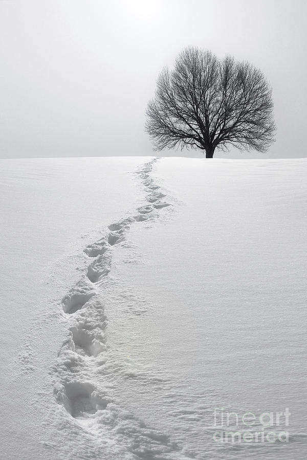 Tree Photograph - Snowy Path by Diane Diederich