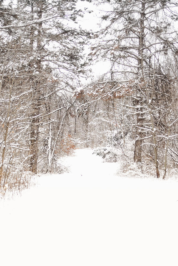 Snowy Path Photograph by Mary Timman