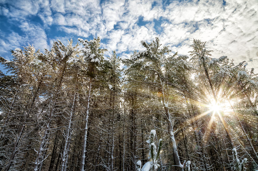 Landscape Photograph - Snowy Pines With Sunflair by Brian Boudreau