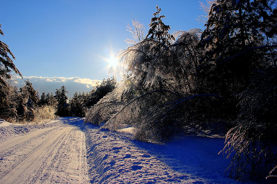 Snow Photograph - Snowy road at Sunkhaze Meadows by Peggy Berger
