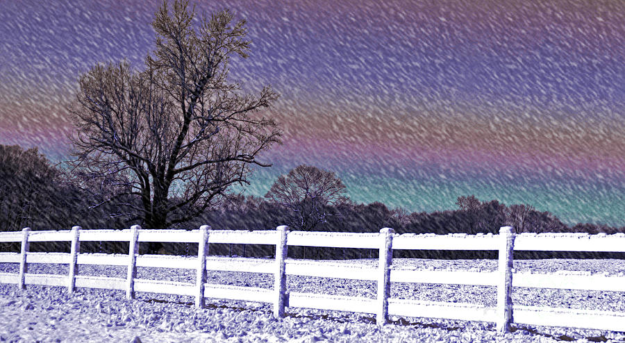 Snow Photograph - Snowy Snowy Night  by Lydia Holly