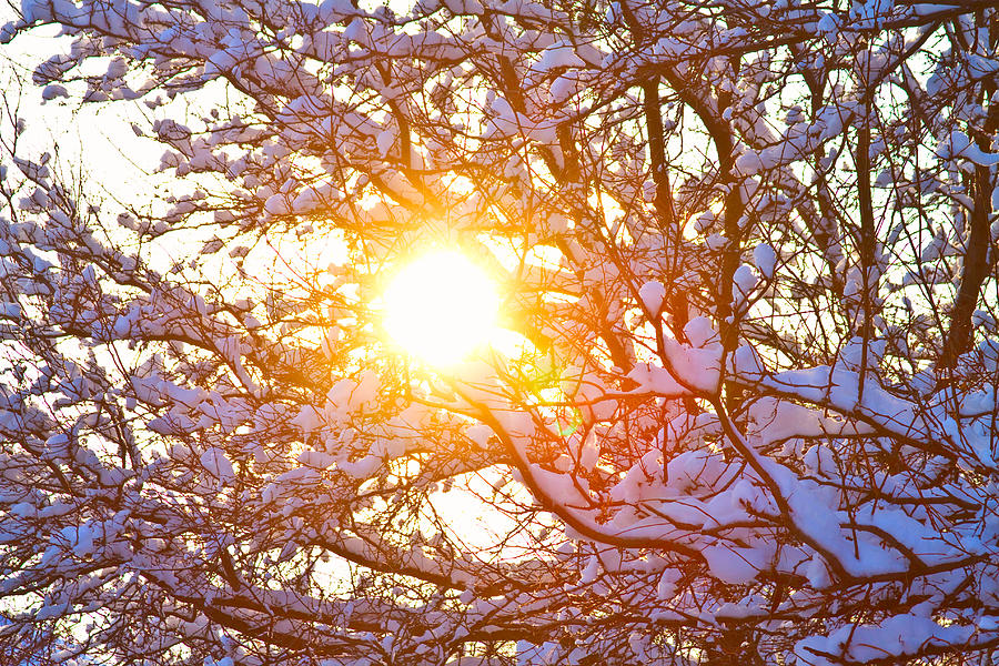 Snowy Tree Branches And Sunshine Photograph