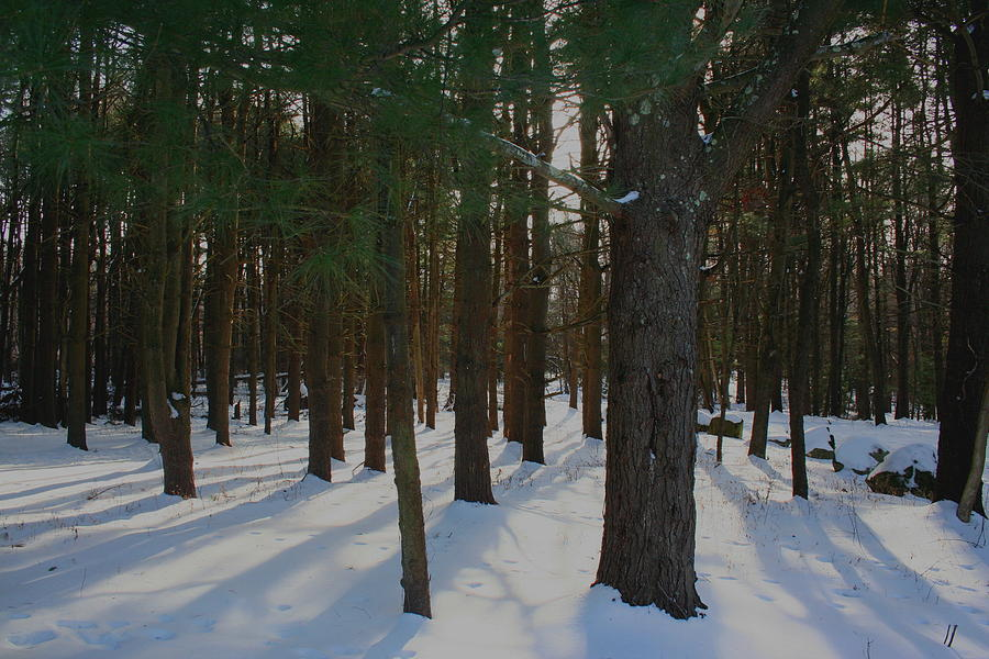 Snow Photograph - Snowy Trees by Stephen Melcher