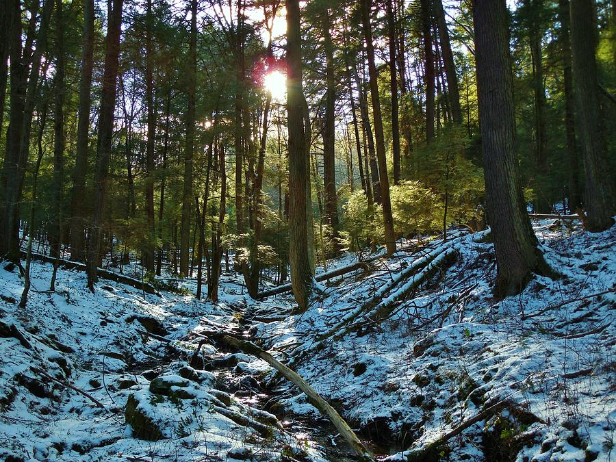 Trees Photograph - Snowy Valley by Anthony Thomas