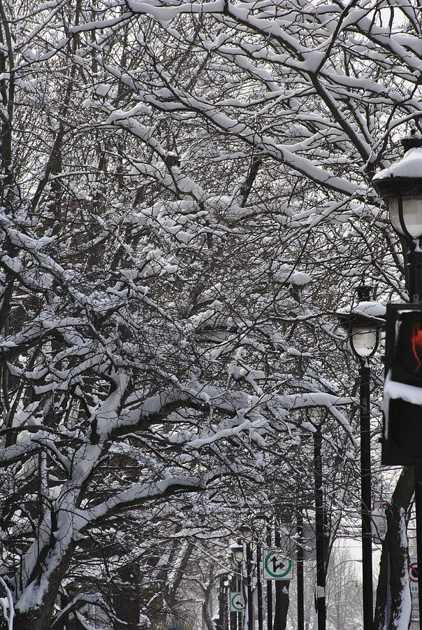 Snow Photograph - Snowy Way by Frederico Borges