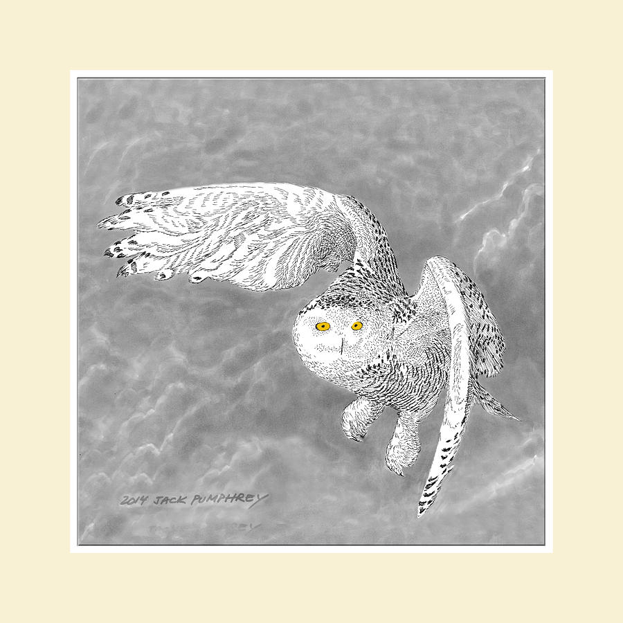 Snowy White Owl Drawing Drawing