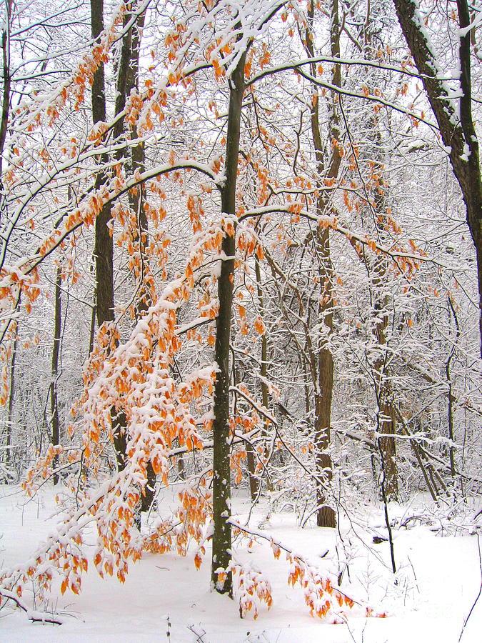 Winter Photograph - Snowy Woods by Ann Horn