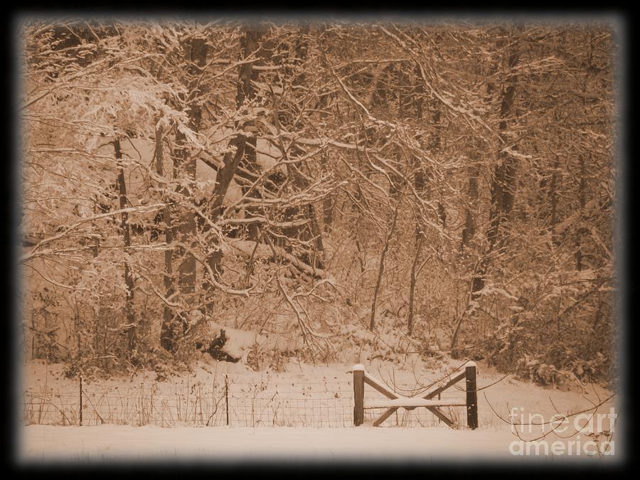 Winter Photograph - Snowy Woods In Bronze by Jamie Mcclellan Elsner