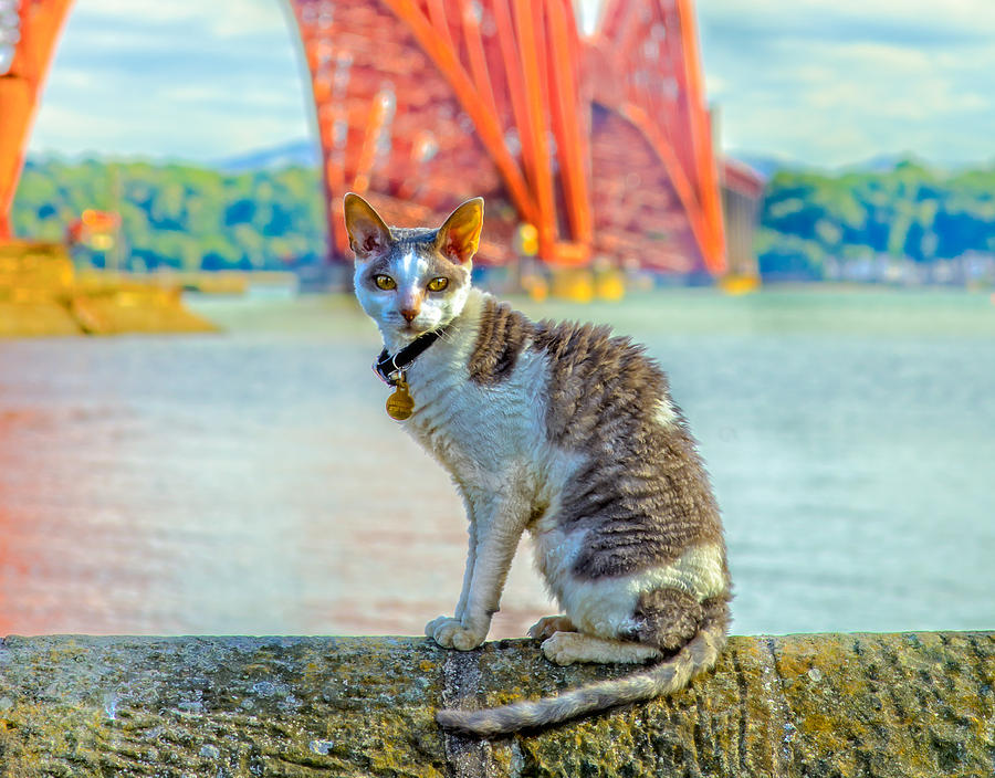 Queensferry Photograph - Snuggles The Cat by Tylie Duff