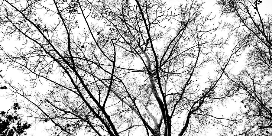 Autumn Photograph - So Seasonal by Pedro Fernandez