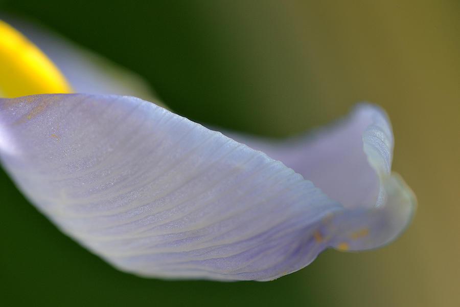 Flower Photograph - So True... by Melanie Moraga