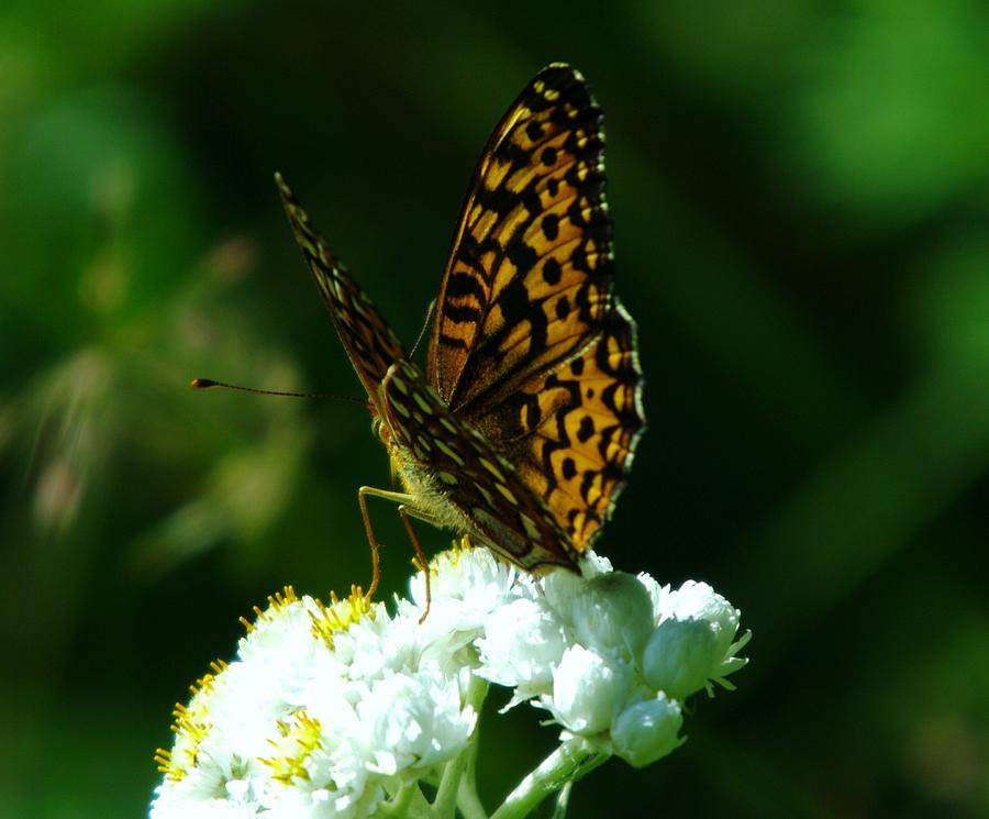 Insects Photograph - Soaking In The Sun by Jeff Swan