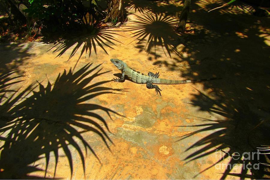 Iguanas Photograph - Soaking Up The Rays by Halifax photographer John Malone