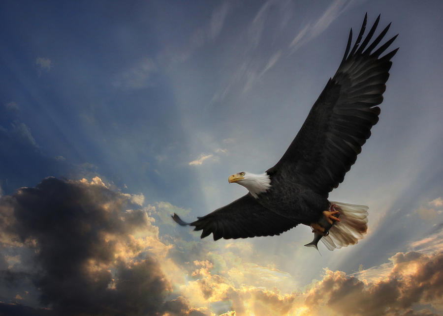 Eagle Photograph - Soar To New Heights by Lori Deiter