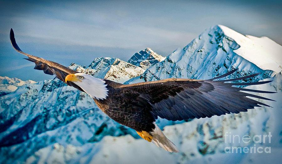 Eagle Photograph - Soaring Bald Eagle by Gary Keesler
