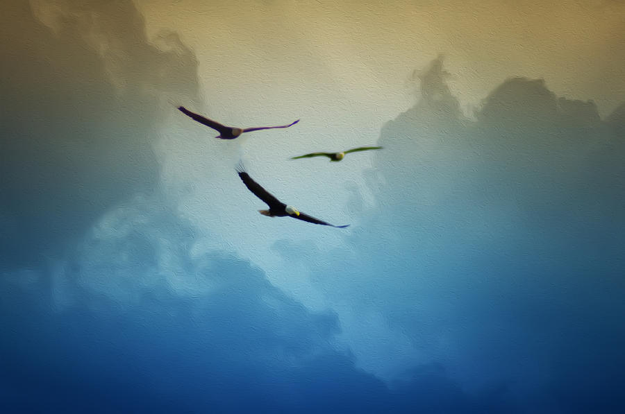 Soaring Eagles Photograph - Soaring Eagles by Bill Cannon