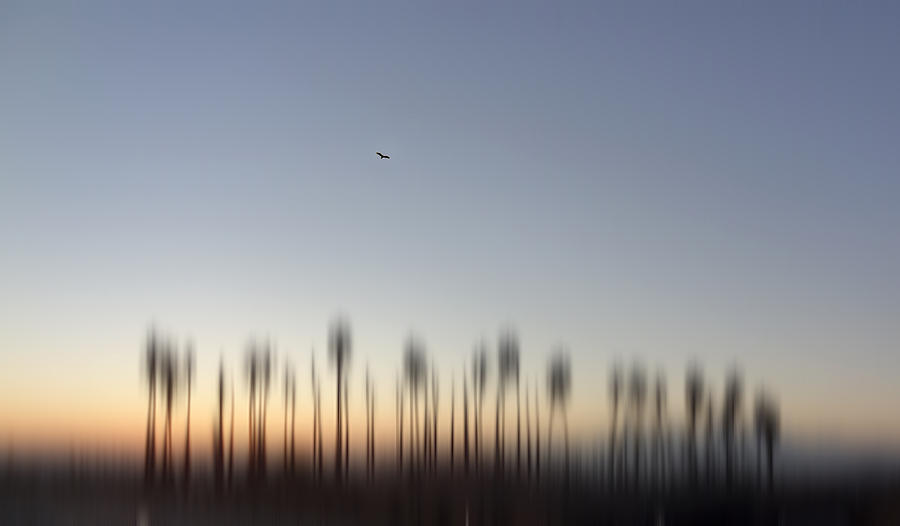 Palm Trees Photograph - Soaring by Eileen Shahbazian