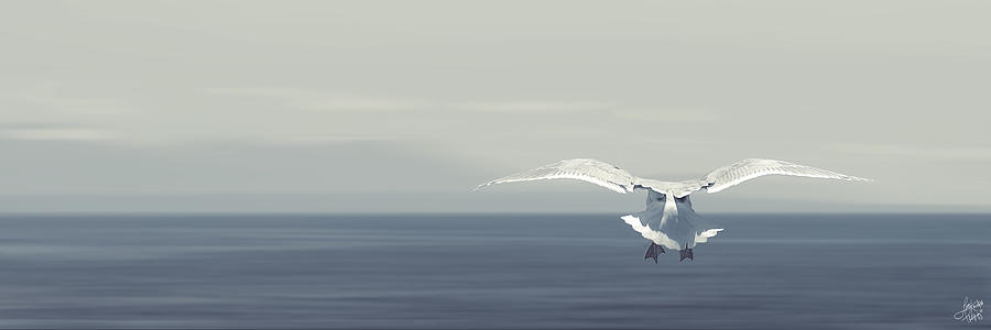 Flying Photograph - Soaring Free by Lisa Knechtel